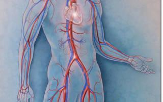 Акупунктурные точки при аритмии сердца