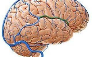 Венозный застой сосудов головного мозга лечение