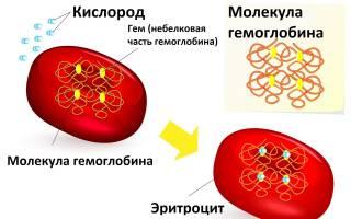 Гемоглобин сколько норма