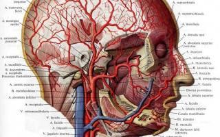 Извитость сонных артерий симптомы и лечение