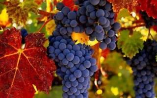 Виноград повышает давление или нет