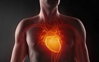 Вес сердца взрослого человека