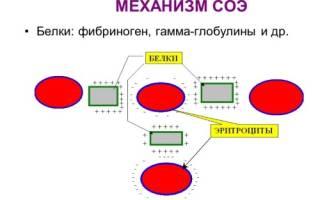 Анализ крови соэ 5