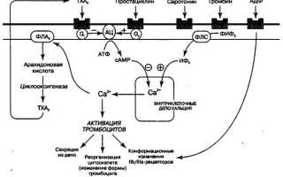 Ингибирует агрегацию тромбоцитов