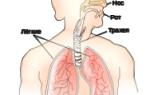 Давление в альвеолах при вдохе