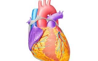 Дополнительные пути проведения в сердце